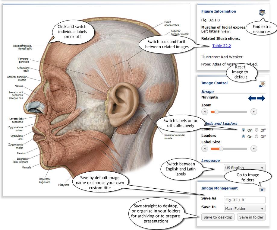 Thieme Teaching Assistant Anatomy − University of Szeged ...